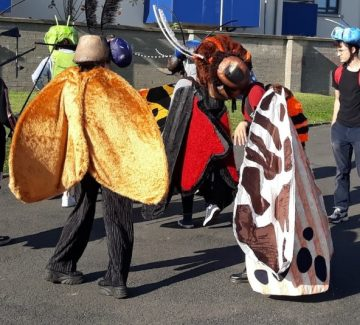 Dunshaughlin Harvest Festival: butterflies